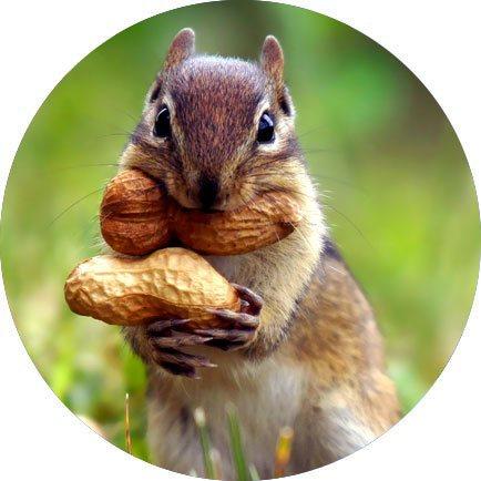 ddk scoiattolo natura